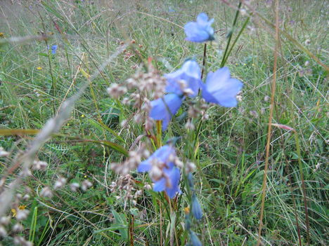 lepkék és virágok 14