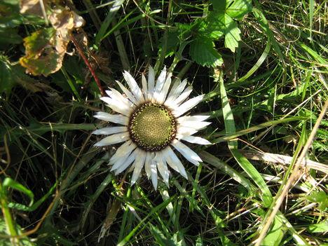 lepkék és virágok 5