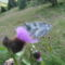 lepkék és virágok 9