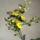 Milus Irén orchideái