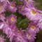 Virágaim 6