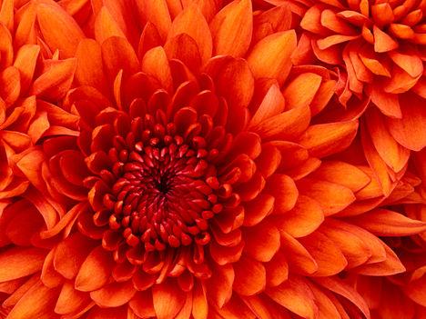 Fogadd őszonte részvétünket!Mindenem eltűnt a gépről ...ne haragudj csak e kép maradt azért piros virágot hoztam !