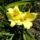 Ujj József és Rozál virágai
