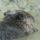 KENUS  képei  -  állatok a természetben