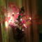 megvilágított levelek