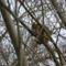 Mint a mókus fenn a fán........(  Macska )                     macsaka )