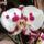 Ujjné Rozál és József orchideái