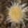 Demeter Gyöngyi képei  -  Nagyhagymas