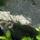 Korpos Réka képei - lepkék és virágok