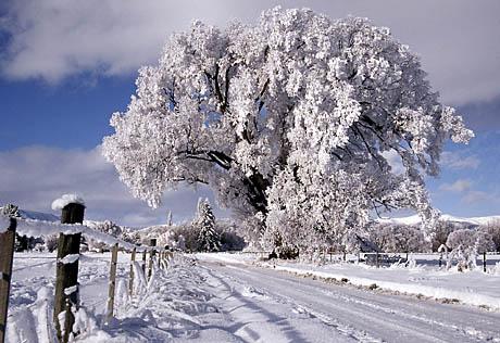 Csillogó hó 3