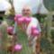 h.a.a. a várongi kaktuszgyüjtemény  57 éve  művelője.