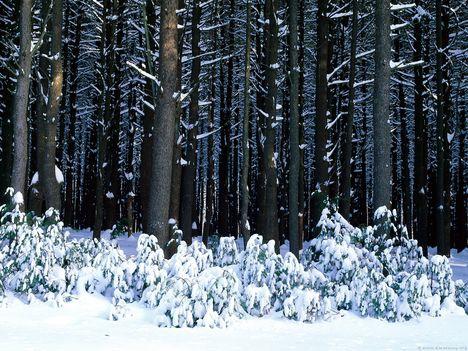 Téli csillogás 8