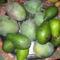 avokádo, és mangó