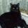 az én cicám Cilike.