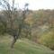 Lókodi ősz2