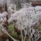 Tél a kertben 13