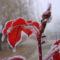 Tél a kertben 21