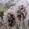Tél a kertben 2