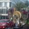 Tenerifei karnevál  107