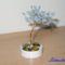 Gyöngyfa2