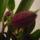 Viragzas___3-001_1324960_7096_t