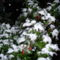 Első hó ezen a télen