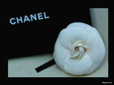 Chanel-chanel-654599_800_600