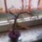 Barátnőm névnapi fája.