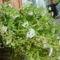 Kései virágok 1