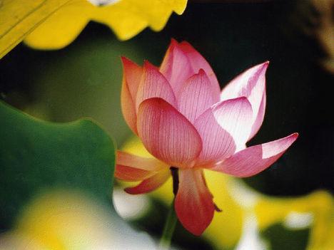 Duzzadó energiájú virág
