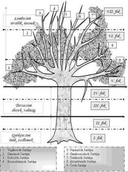 vilagfa részei a földalatti, földi és égi világ