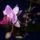 Edit virágai