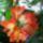 Bérces Éva képei  -  virágok