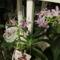 kék orchidea 1