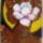 Magnolia_1033664_1406_t