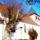 Templom__a_michelsbergen_1303919_2534_t