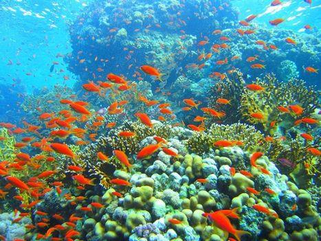 tenger alatti világ 5