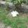 Móki cica