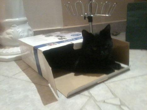 Nem hontalan vagyok, csak imádom a dobozokat!