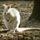 Albino_brifko_kenguru_1346182_8330_t