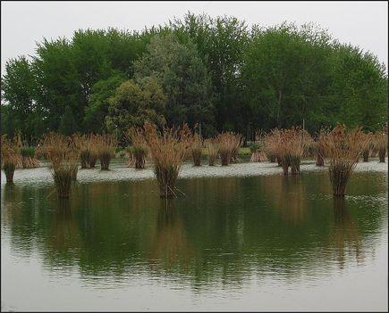 Bujtosi tó nyár