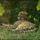 Gepard_01_1346144_5183_t