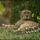 Gepard_02_1346174_2726_t