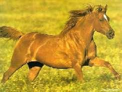 Szép lovak