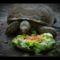 Teknős ebéd 02