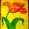 tulipán,a  kedvenc virágom