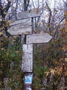 Pilisi erdőben 1