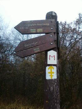 Pilisi erdőben 3