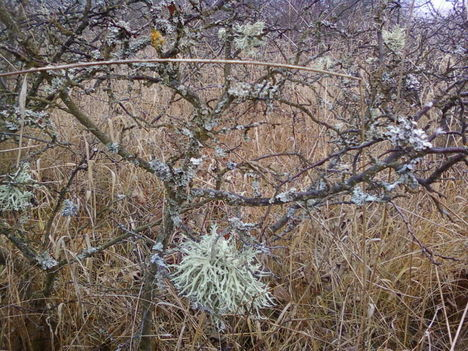 Pilisi erdőben 4