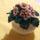 Gyöngyből készült virágok (Cserépben,kosárban,kaspóban)